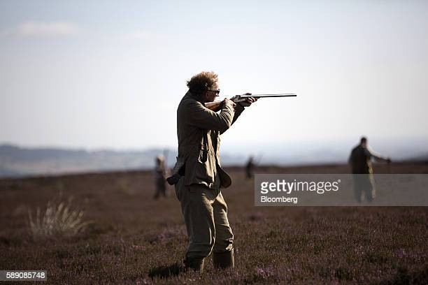 A member of the shooting party takes aim with a shotgun during a walked up grouse shoot on Egton High Moor in Yorkshire UK on Friday Aug 12 2016 'The...