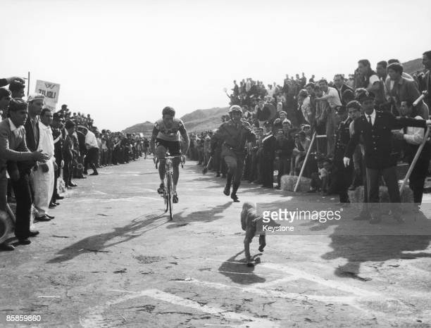 A member of the Spanish KasKaskol team is briefly accompanied by a dog during the 7th Stage of the 50th Giro d'Italia May 1967