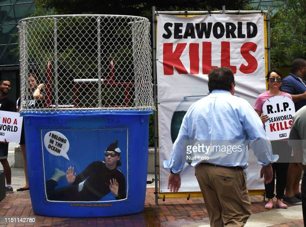 Member wearing an orca suit swims in a small tank of water urging passersby not to buy tickets to SeaWorld on June 20, 2019 in Orlando, Florida. The...