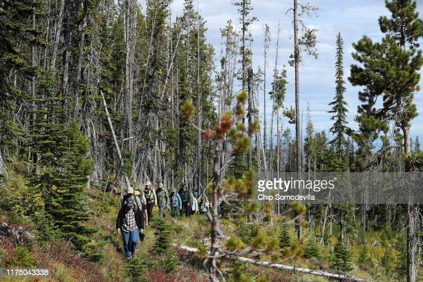 Members and guests of the Whitebark Pine Ecosystem Foundation take a guided hike into the mountains of the Flathead Indian Reservation to see...