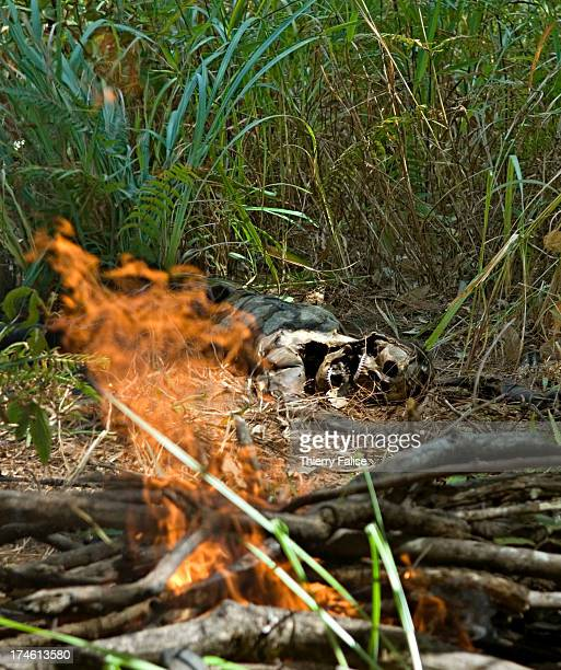 Members from a Free Burma Rangers team prepare to cremate the body of a porter used by the Burmese army found abandoned with a bullet hole in the...