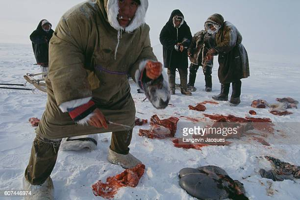 Members of a Dolgan hunting party butcher a reindeer before transporting it on a sled The Dolgans traditionally a nomadic people who live along the...