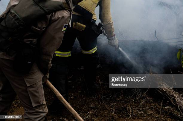 Members of a firefighting task force put out a smoldering log during a fire in the Amazon rainforest near Porto Velho Rondonia state Brazil on Sunday...