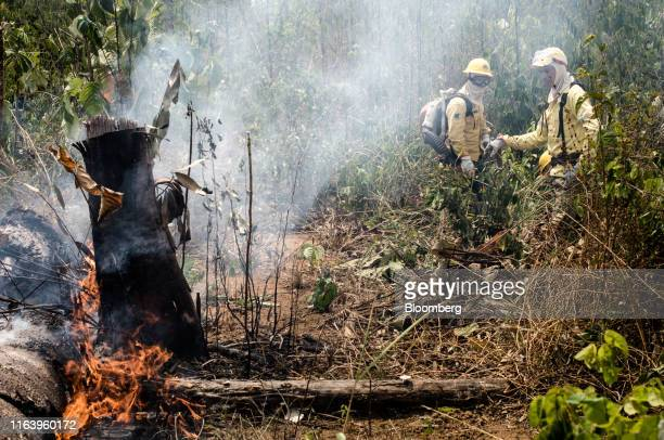 Members of a firefighting task force work on putting out a fire in the Amazon rainforest near Porto Velho Rondonia state Brazil on Sunday Aug 25 2019...