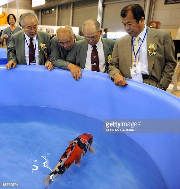 Members of a judging committe admire a koi fish the grand prize winner of the First Asia Cup Koi show in Singapore on May 3 2008 The colourful koi a...