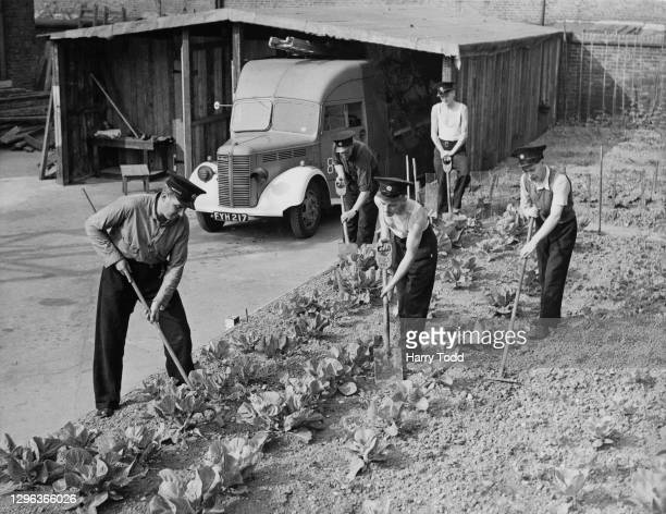 Members of a South West London Auxiliary Fire Service station tend to their vegetable allotment garden beside the Oxford Bedford WLG Heavy Unit Fire...