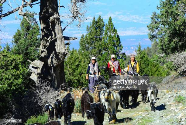 Members of Karakecili Yoruks are seen migrating in tough winter conditions with around 1200 goats at Banaz district on October 27, 2018 in Turkey's...