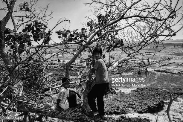 Members of Mah Meri tribe children plays near the tree after a thanksgiving 'Puja Pantai' ritual ceremony on February 9 2019 in Pulau Carey outside...