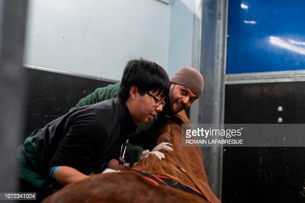 Members of medical staff from equine clinical unit 'Clinequine' provides care to a horse on November 20 in MarcyL'Etoile near Lyon centraleastern...