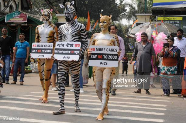 Members of People for the Ethical Treatment of Animals bodypaints themselves as Tiger Cheetah and Zebra and carring placards proclaimed 'No More...