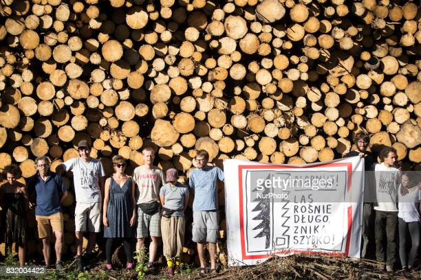 Members of quotCamp for forestquot organization hold a banner quotForest grows long disaapear fastquot during event near illegal logging near...