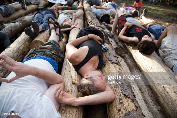 Members of quotCamp for forestquot organization lie down on cutted down trees near illegal logging during event near illegal logging near Bialowieza...