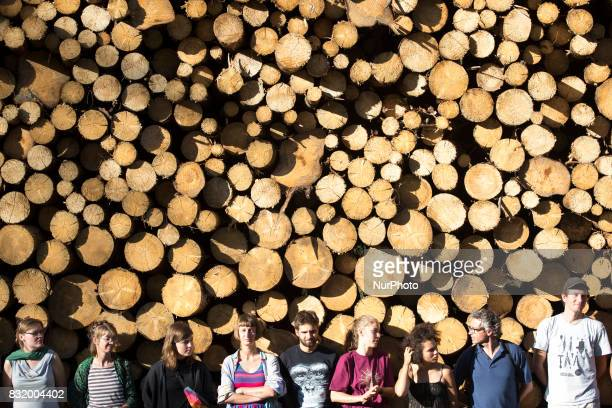Members of quotCamp for forestquot organization stand near illegal logging during event near illegal logging near Bialowieza on August 15 2017
