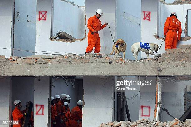 Members of Sichuan Provincial Earthquake Disaster Emergency Rescue Team search for victims during an earthquake rescue drill on November 1 2005 in...