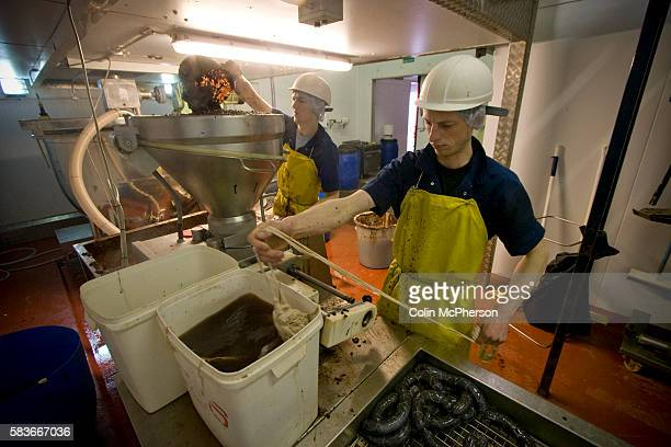 Members of staff at R S Ireland in Haslingden Lancashire operating a filling machine making traditional Bury black puddings which the company is...