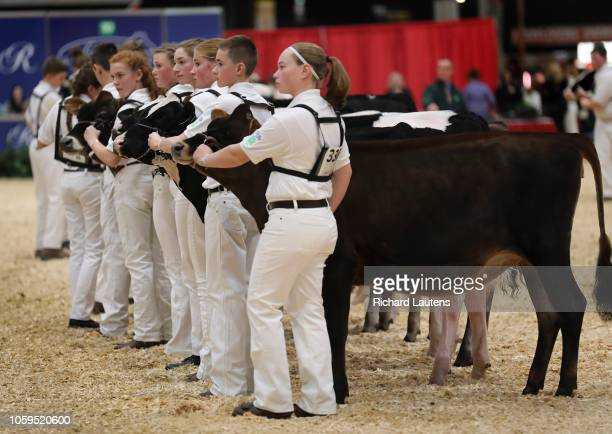 Members of the 4H Dairy classic stand for judging The Royal Agricultural Winter Fair is on for 10 days at Exhibition Place The Royal is the largest...