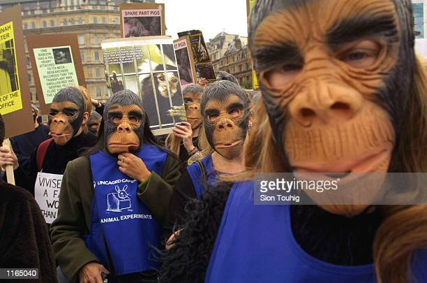 Members of the animal rights group Uncaged stage a Primate Protest demonstration September 21 2001 in Trafalgar Square in London England The...