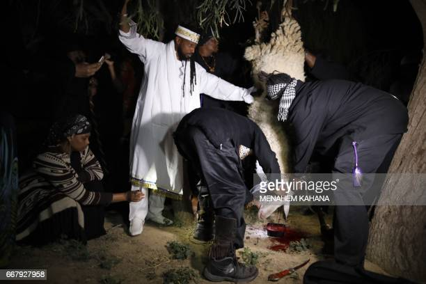 Members of the Beit Yisrael sect part of the African Hebrew Israelite Nation of Jerusalem slaughter a lamb during a Passover sacrifice ceremony on...