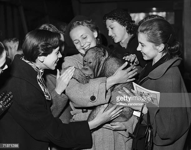 Members of the Bolshoi Ballet with Alexander the orang-utan during their visit to London Zoo, 26th October 1956.