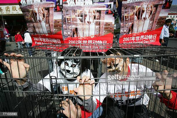 Members of the CCAPN wearing cat and dog masks sit in a cage during a demonstration against the eating of cat and dog meat on September 29 2007 in...