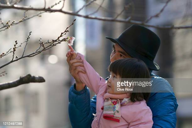 Members of the general public photograph some of the first Cherry blossom blooms to flower in Tokyo The cherry blossom is deeply symbolic in Japan it...