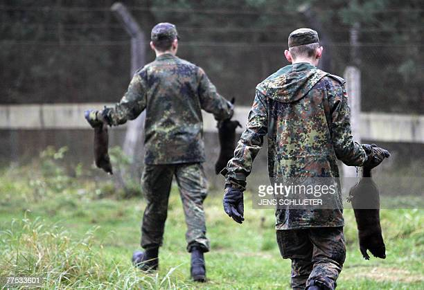 Members of the German Army recapture mink after they and more than 10,000 others were released from a breeding facility in the eastern German town of...