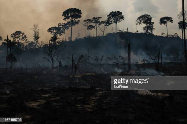 PARA BRAZIL Members of the IBAMA forest fire brigade fight burning in the Amazon area of rural settlement PDS Nova Fronteira in the city of Novo...