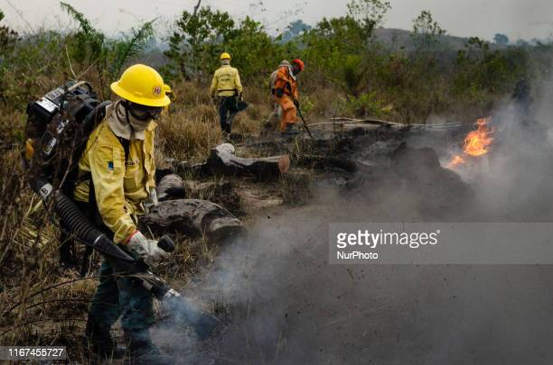 Members of the IBAMA forest fire brigade fight burning in the Amazon area of rural settlement PDS Nova Fronteira, in the city of Novo Progresso, Para...