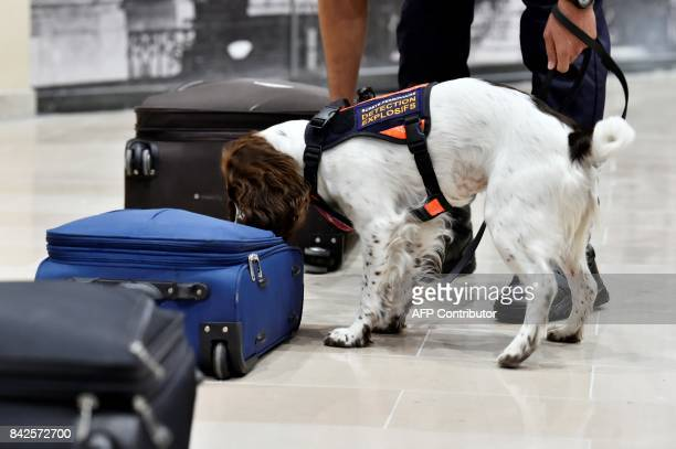 Members of the Ile de France region rail police take part in a drill with Lina a springer Spaniel dog trained for explosives detection at a subway...