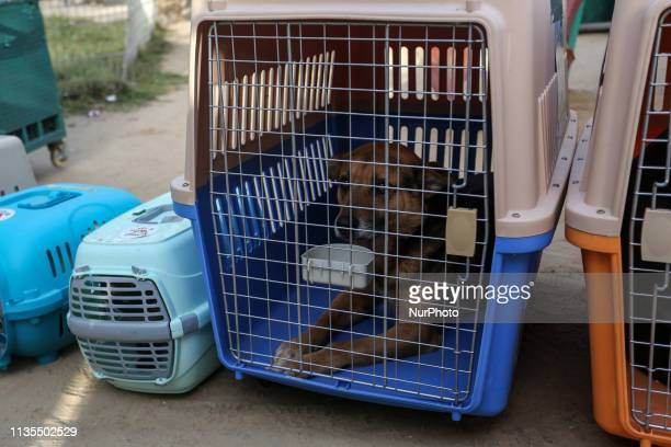 Members of the international animal welfare charity quotFour Pawsquot transport cages containing animals at a zoo in Rafah in the southern Gaza Strip...