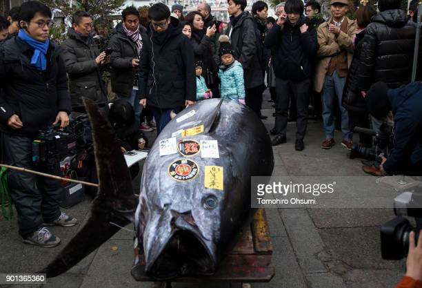 Members of the media and tourists look at the highest priced fresh bluefin tuna auctioned from the year's first auction at Tsukiji Market on January...