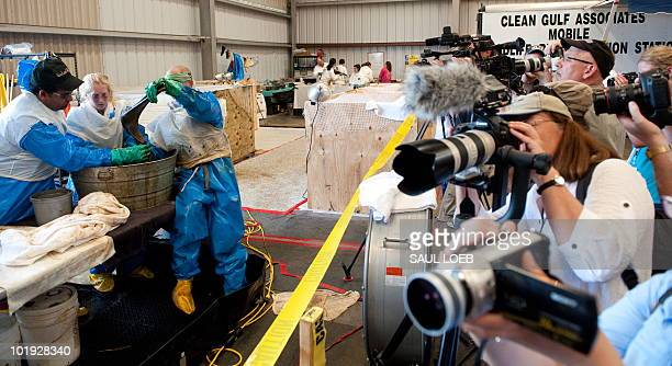Members of the media photograph volunteers as they clean oil covered pelicans found off the Louisiana coast and affected by the BP Deepwater Horizon...
