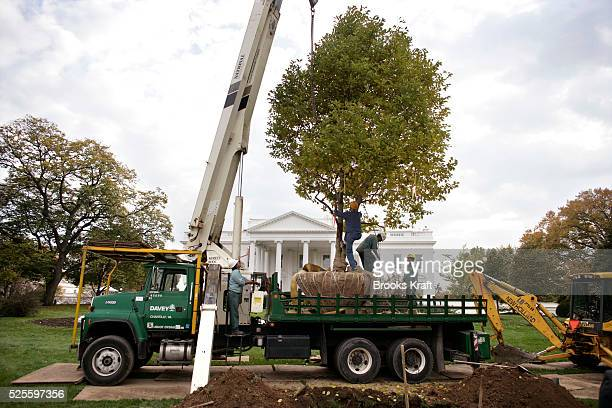 60 Top White House Magnolia Pictures Photos Images Getty Images