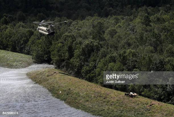Members of the Ohio Army National Guard prepare to drop bales of hay from the back of a CH74 Chinook helicopter to stranded cows on September 5 2017...