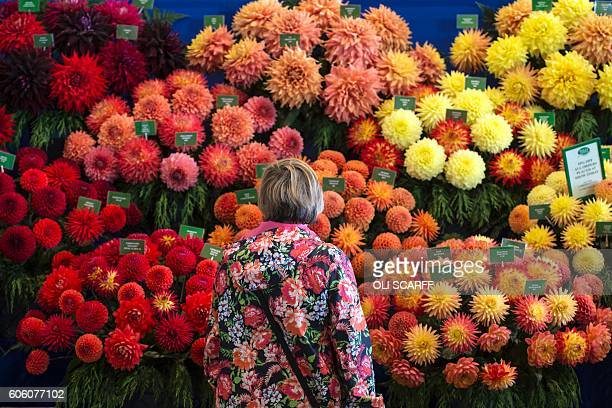 TOPSHOT Members of the public admire the displays of flowers on the first day of the Harrogate Autumn Flower Show held at the Great Yorkshire...