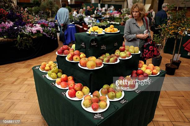 Members of the public attend the Royal Horticultural Society's London Autumn Harvest Show in Lawrence Hall on October 6 2010 in London England The...
