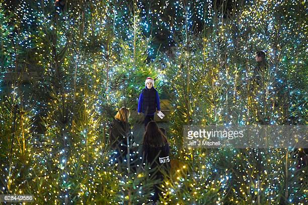 Members of the public enjoy a Christmas Tree Maze on December 7 2016 in EdinburghScotland The Christmas Market is situated in Princes Street Gardens...