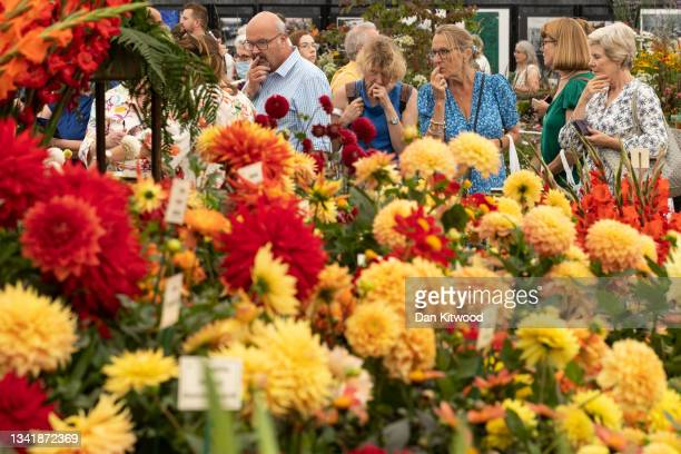 Members of the public enjoy a display of dhalias in the main pavilion at the Chelsea Flower Show on September 22, 2021 in London, England. This...