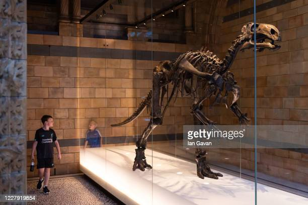 Members of the public enjoy the exhibits during the reopening of the Natural History Museum on August 5, 2020 in London, England. The museum closed...