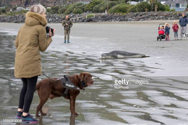 Members of the public look at a leopard seal on Sumner beach in Christchurch, New Zealand on September 02, 2021. Leopard seals are usually found on...
