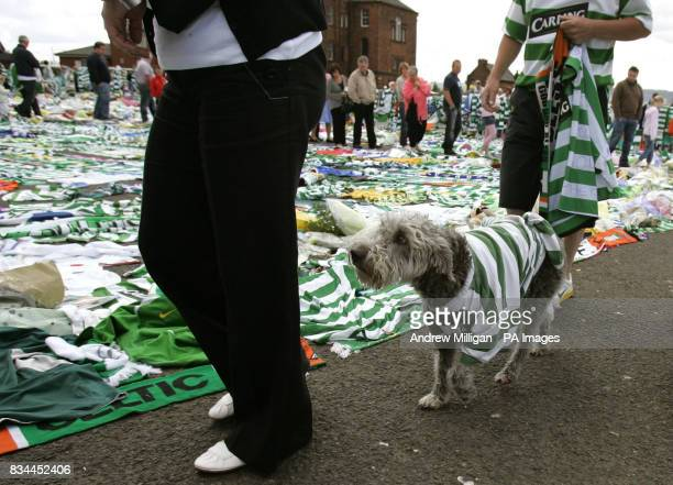 60 Top Tommy Burns Tribute Pictures, Photos, & Images