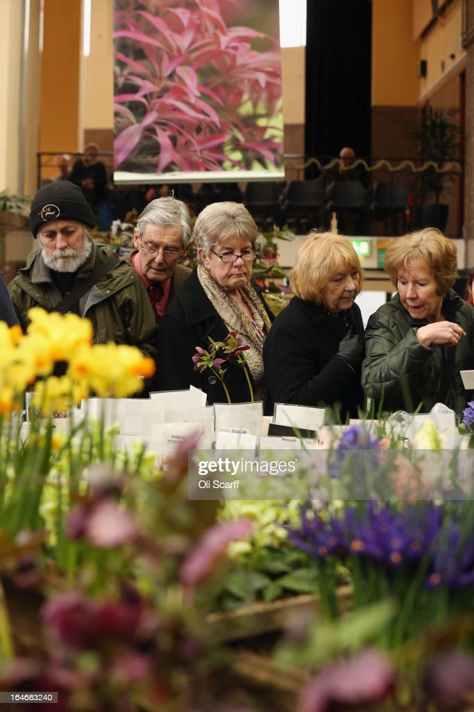 Members of the public peruse a stall selling plants at the RHS Great London Plant Fair on March 26, 2013 in London, England. The fair takes place in the RHS Horticultural Halls on March 26-27, 2013 and features numerous botanical displays, advice from the RHS, Alpine Garden Society stalls and the results of the 'Early Daffodil and Hyacinth Competition'.