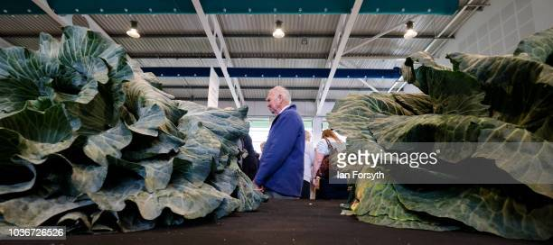 Members of the public view the cabbages in the giant vegetable competition as they are displayed on the first day of the Harrogate Autumn Flower Show...