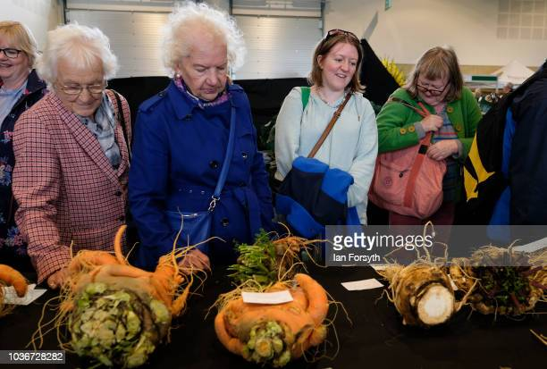 Members of the public view the carrots and parsnips in the giant vegetable competition as they are displayed on the first day of the Harrogate Autumn...
