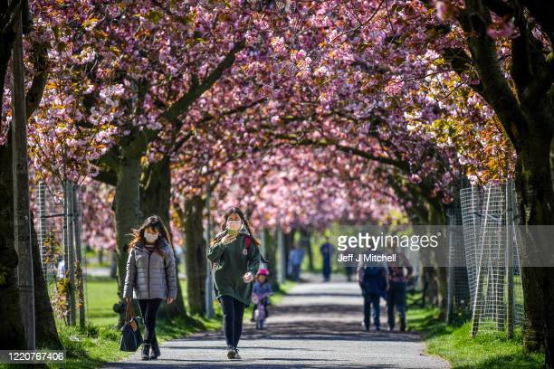 Members of the public view the cherry blossom in the Meadows after a month of lockdown on April 24 2020 in Edinburgh United Kingdom The British...