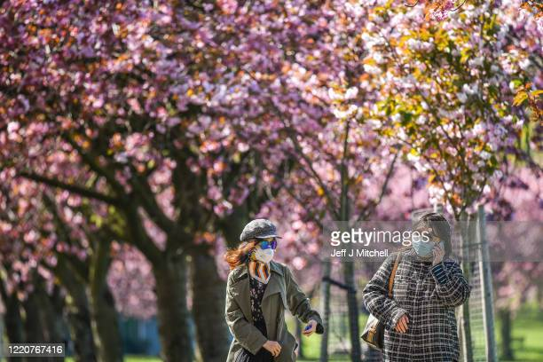 Members of the public view the cherry blossom in the Meadows after a month of lockdown on April 24, 2020 in Edinburgh, United Kingdom. The British...