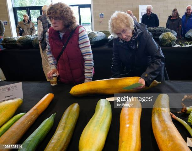 Members of the public view the cucumbers in the giant vegetable competition as they are displayed on the first day of the Harrogate Autumn Flower...