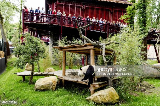 Members of the public visit giant panda Wu Wen during the official opening of the panda base Pandasia at the Ouwehand Zoo in Rhenen on May 30 2017 Wu...