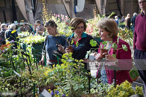 Members of the public visit the Royal Horticultural Society's 'Great London Plant Fair' in the RHS Lawrence and Lindley Halls on April 1 2014 in...