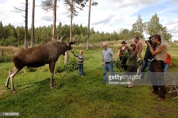Members of the public visits the Ellinge moose farm on July 16 2012 in Mullsjo Sweden